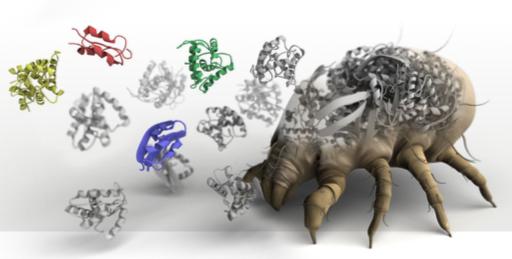 IgE sp. D201 Roztocze – komponenta rDer p1