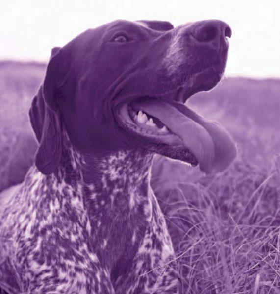 IgE sp. E101 Sierść psa – komponenta rCan f1