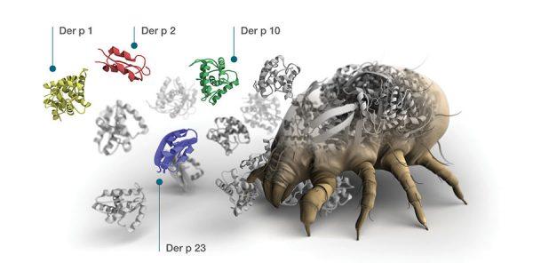 IgE sp. D1 Dermatophagoides pteronyssinus