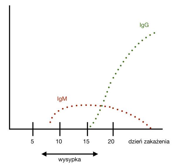 Odra (Morbilli virus) IgM